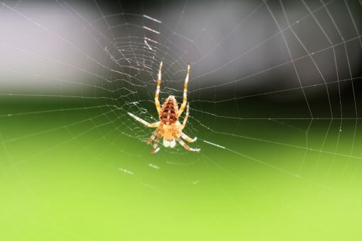Larclean Saúde Ambiental - Aranhas
