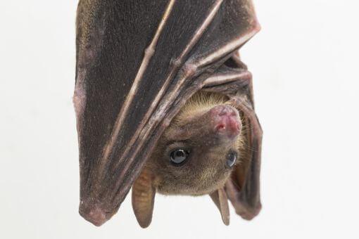Manejo de Morcegos | Dedetizadora em Salvador e Goiânia
